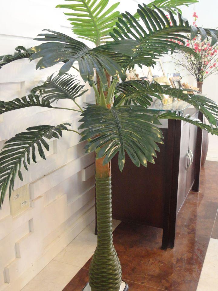 Pin vasos e bonsai on pinterest - Planta pata de elefante ...