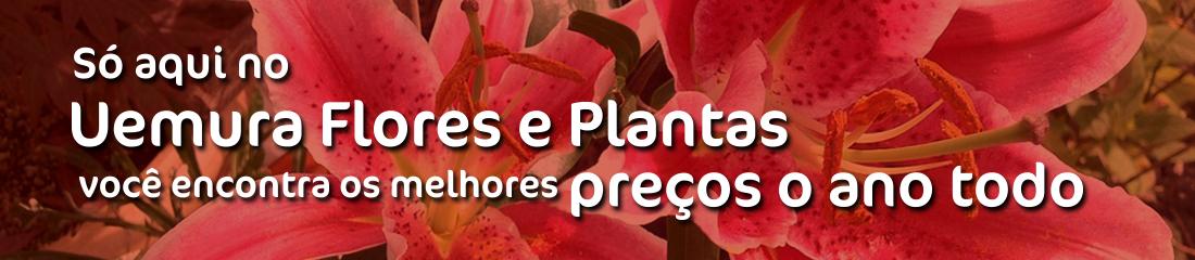 Uemura Flores e Plantas - Slide 2