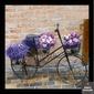 Quadro Bicicleta Preta Flores Lavanda