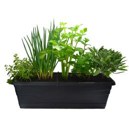 Jardineira com prato e 5 temperos- 60 cm. Selecione a cor: