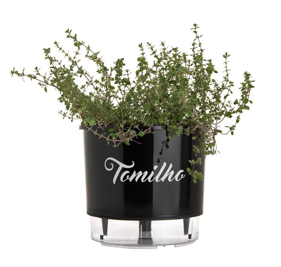 Vaso Autoirrigável Tomilho<br> Ø 16cm x 14cm