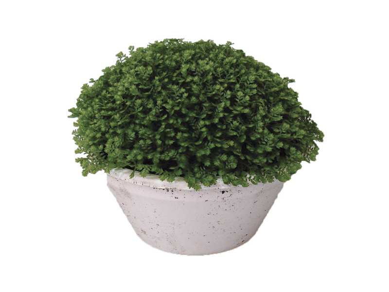 Musgo Verde<br> cuia 13 cm