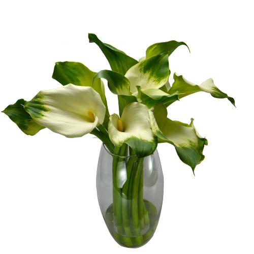 Callas Verde 60 cm- maço com 10 hastes- vaso não incluso