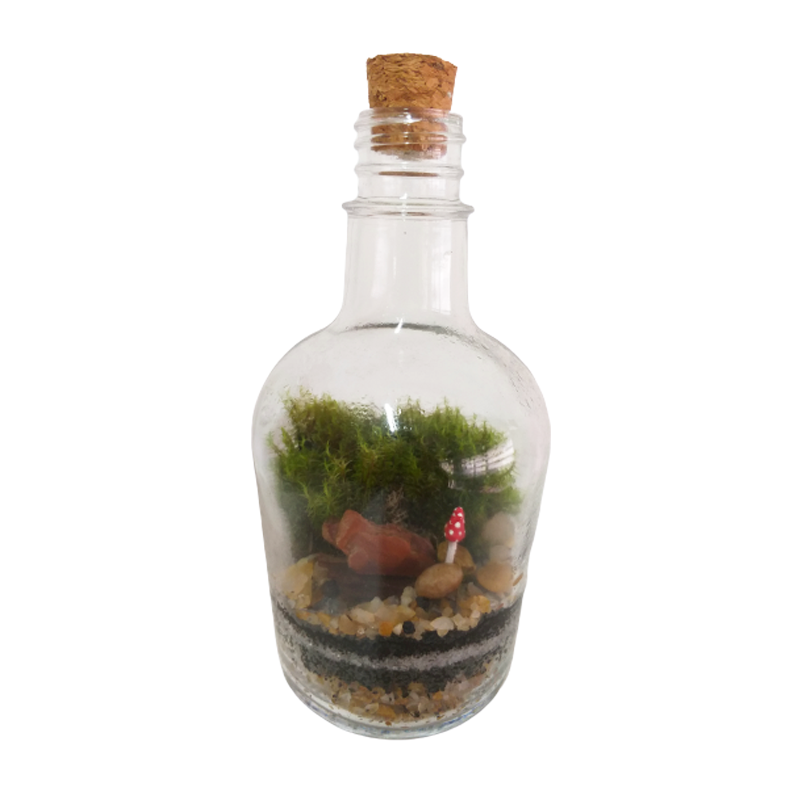 Terrário em garrafa fechada