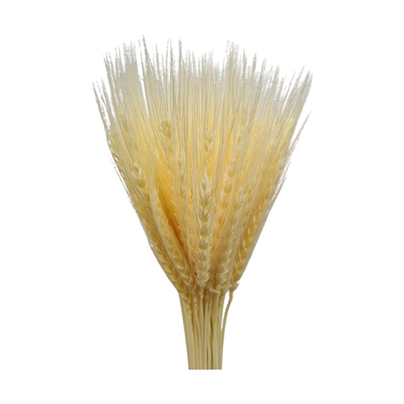 Trigo Alvejado seco maço com 40 hastes