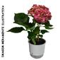 Vaso Autoirrigável Rosa <br> Ø 16cm x 14cm