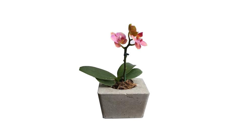 Mini Vaso Quadrado de Cimento<br>a planta não acompanha o vaso