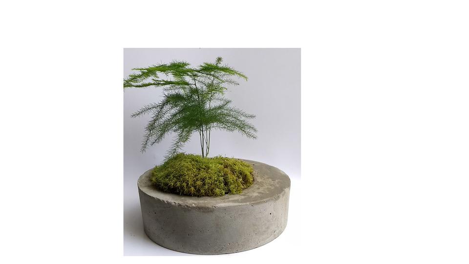 Mini Vaso Redondo de Cimento<br>a planta não acompanha o vaso