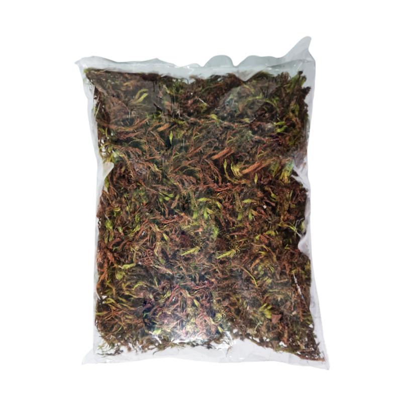 Musgo seco verde 100 gramas