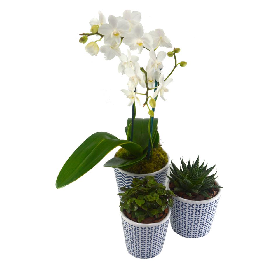 Conjunto de Plantas em Cachepôs Vintage