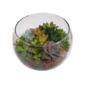 Terrário aberto em aquário de vidro pequeno