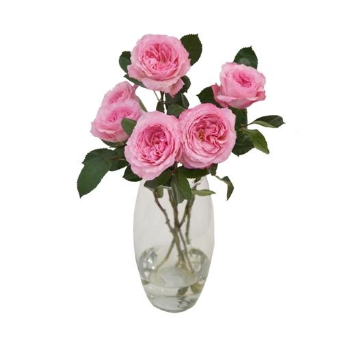 Haste de Rosa Inglesa