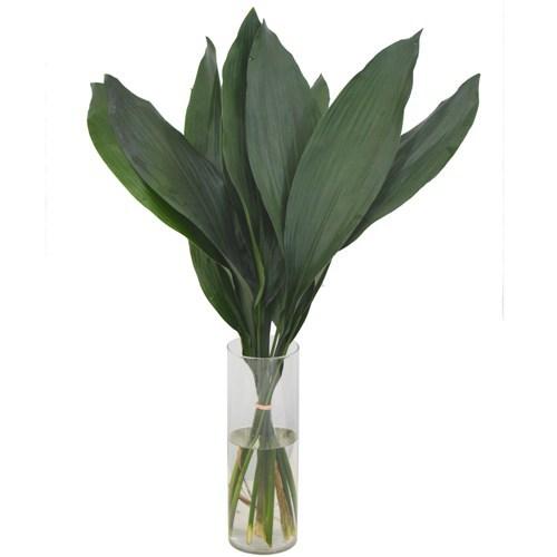 Haran / Aspidistra em maço<br>vaso não incluso
