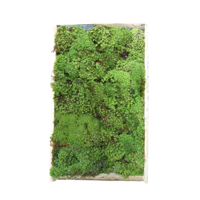 Musgo Verde em caixa