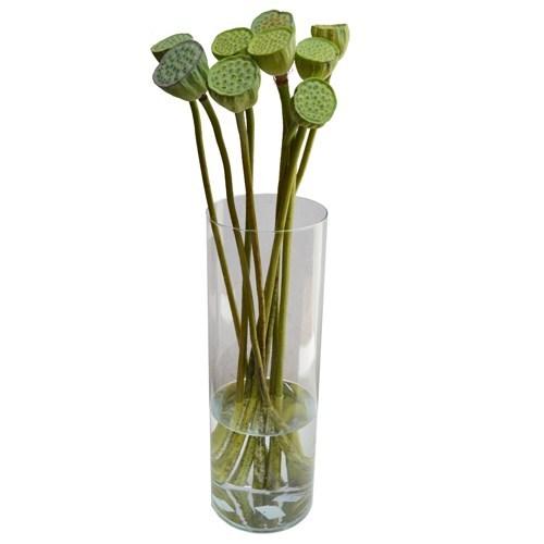 Haste de Semente de Lotus<br> vaso não incluso