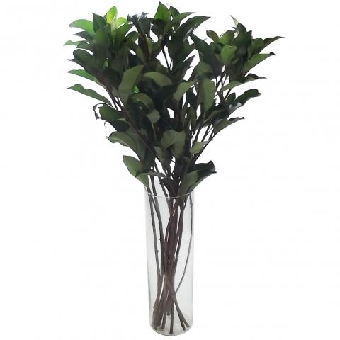Fotínia Verde em maço<br>vaso não incluso