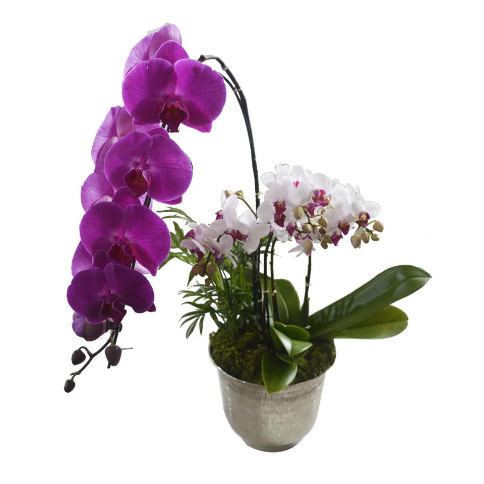 Arranjo Orquidea Pink