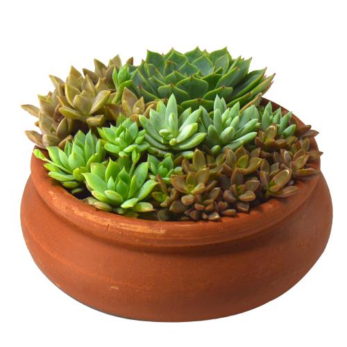 Arranjo de Suculentas <br> Vaso bonsai nº 0