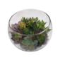 Terrário aberto em aquário de vidro médio