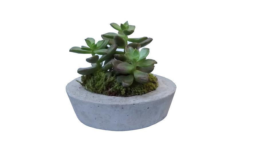 Mini Vaso Oval de Cimento<br>a planta não acompanha o vaso