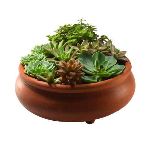 Arranjo de Suculentas <br> Vaso bonsai nº 2