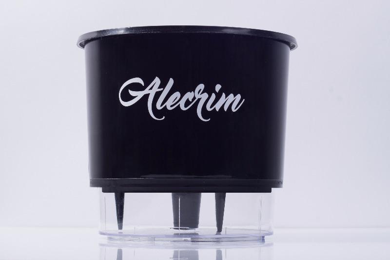 Vaso Autoirrigável Alecrim <br> Ø 16cm x 14cm