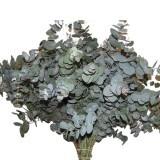 Folha de Eucalipto - Eucaflor em maço