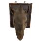 Taxidermia Profissional  Cabeça Original de ANTA