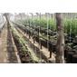 Gotejador Ga1 Regulável para Irrigação gotejamento