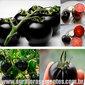 Sementes de tomate cereja preto black cherry tasty russian pérola negra
