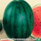 Sementes de melancia sugar baby