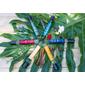 Kit Perfumes Botânicos